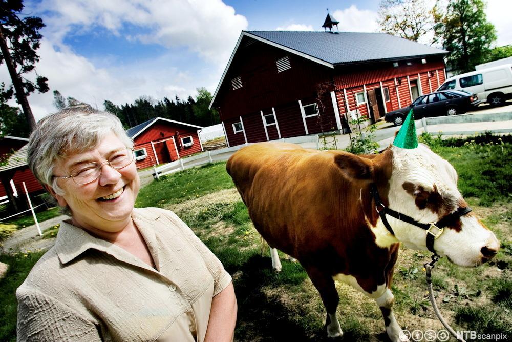 """Inger Skjervold Rosenfeld og """"Den blinde ku"""". Foto."""
