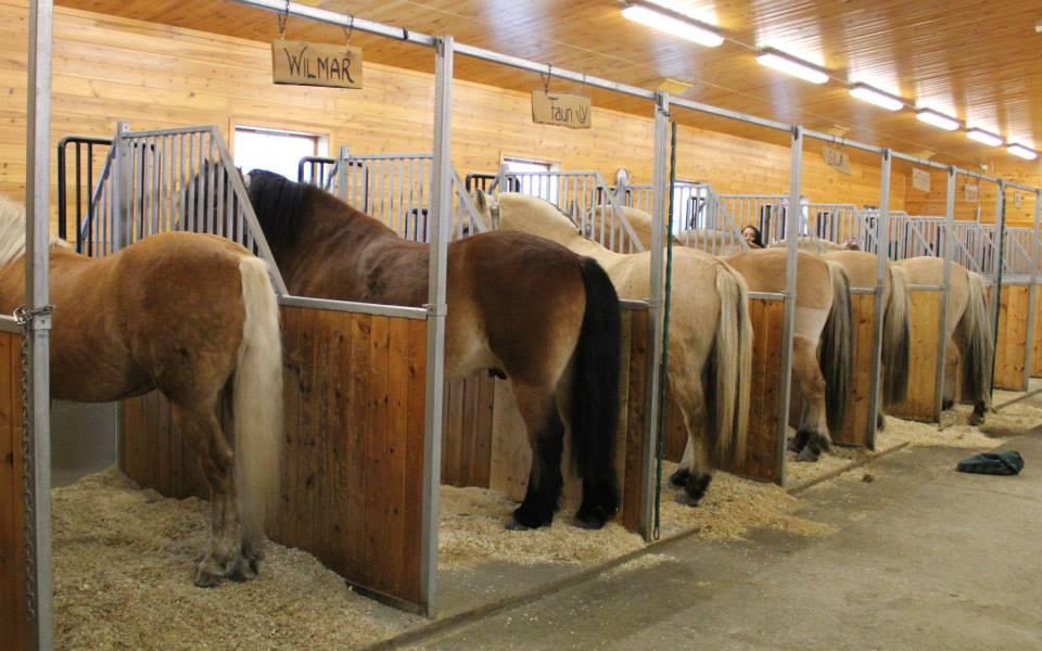 Stall med hester sett bakfra. Foto.