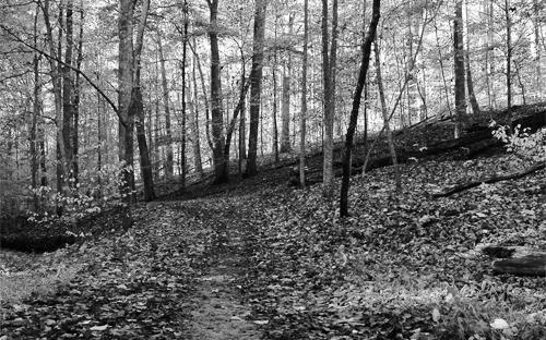 Gjørmete sti i løvskog. Foto.