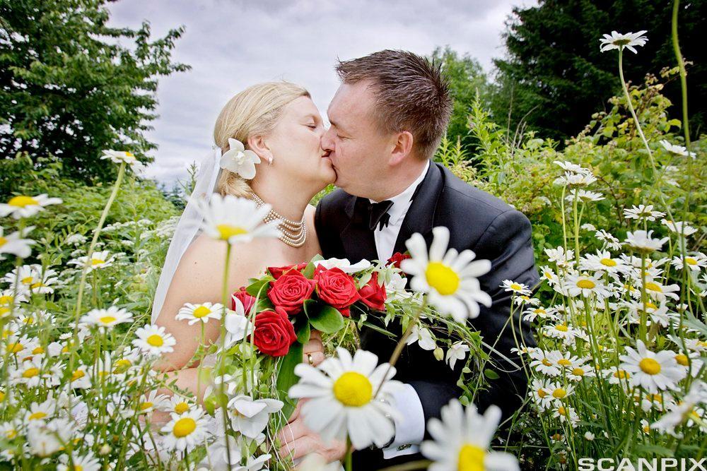 Brudepar kysser i blomstereng. Foto.