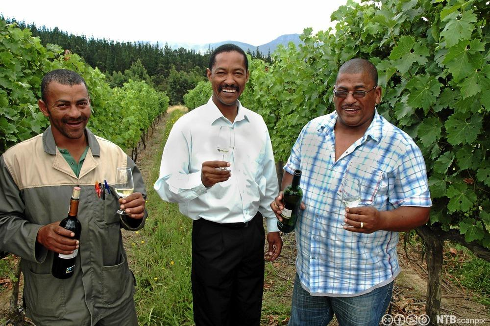 Tre menn som står ute mellom vinrankane og har med seg flasker og glas med vin.