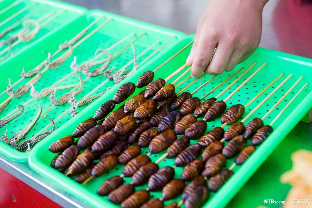 Grillspyd med fritterte larver ligger på et brett. foto.
