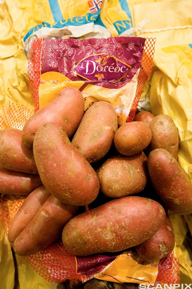 Potatoes. Photo.