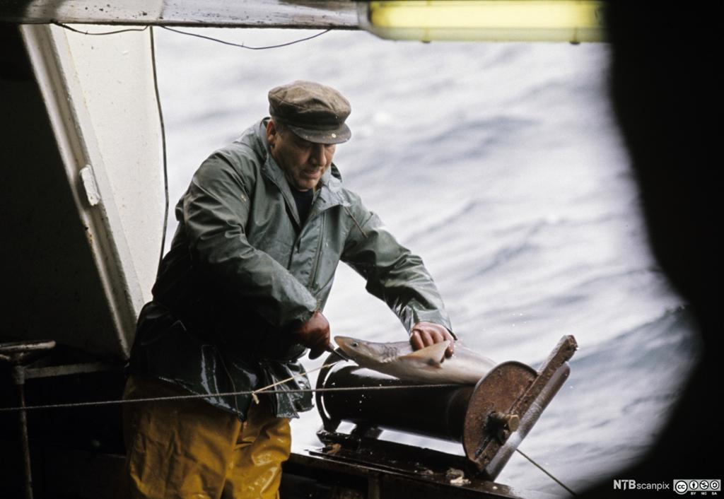 Båt med autoline. Foto