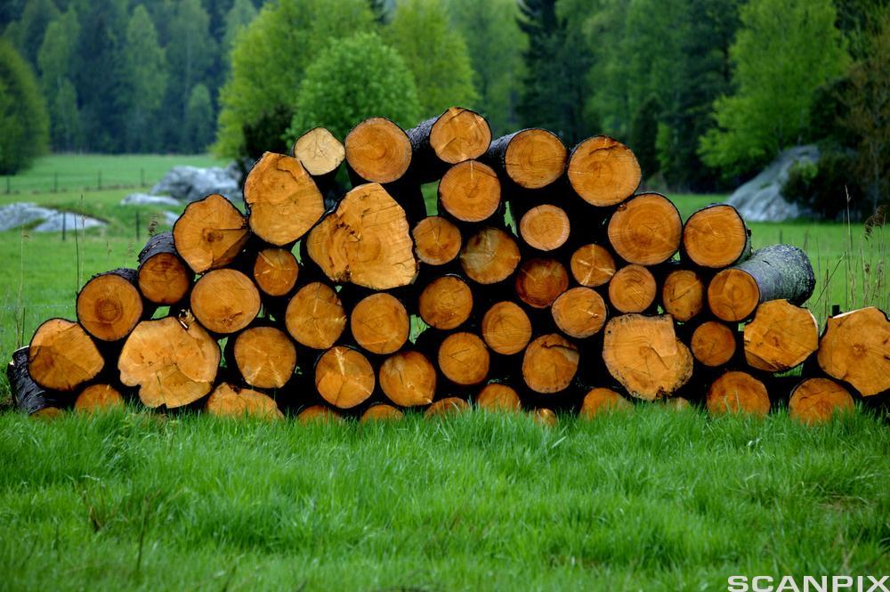 Stabel med tømmer i skogkanten. Foto.