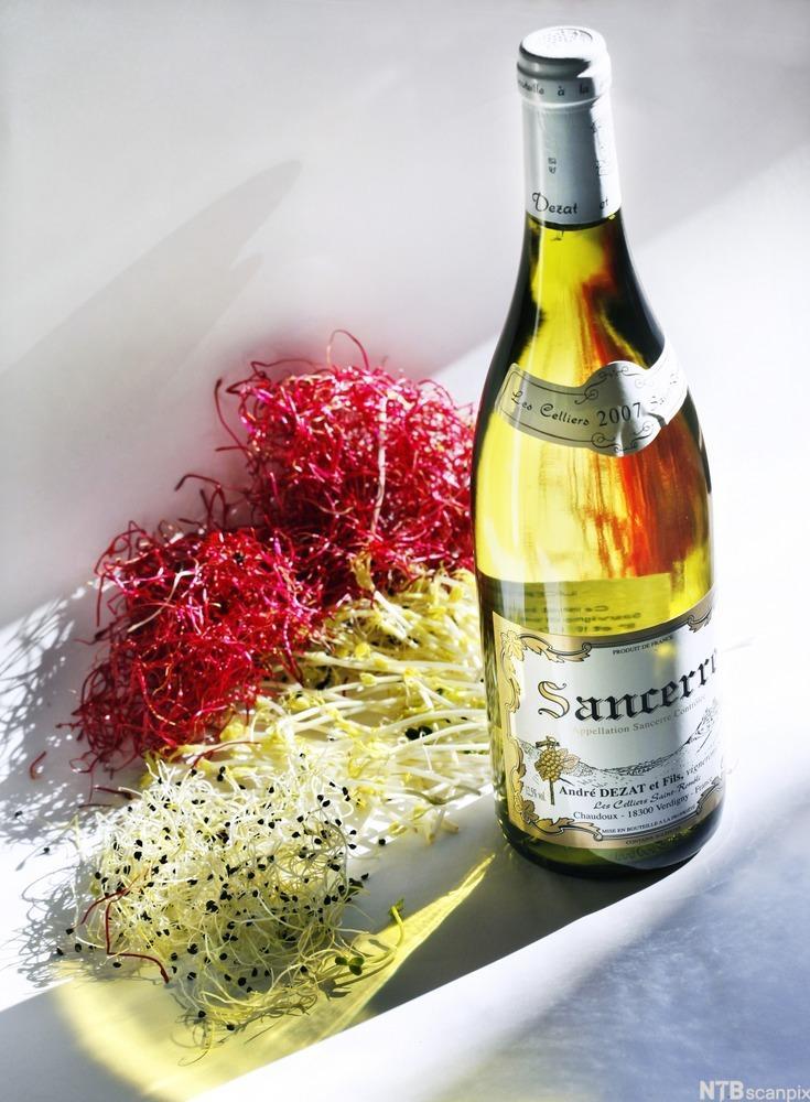 Spirer og en flaske dezat sancerre hvitvin. Foto.