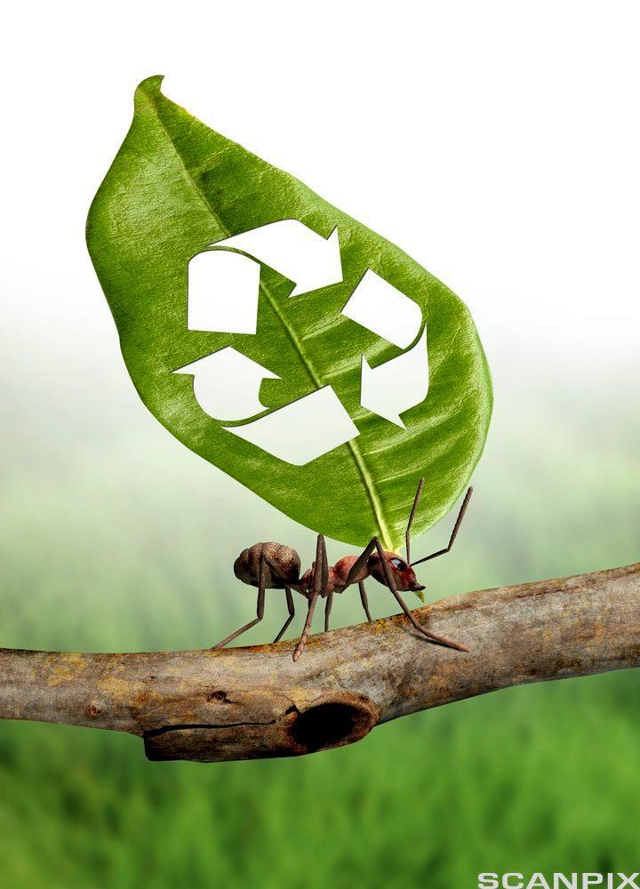 En maur bærer på et stor, grønt blad med symbolet for resirkulering på. Illustrasjon.