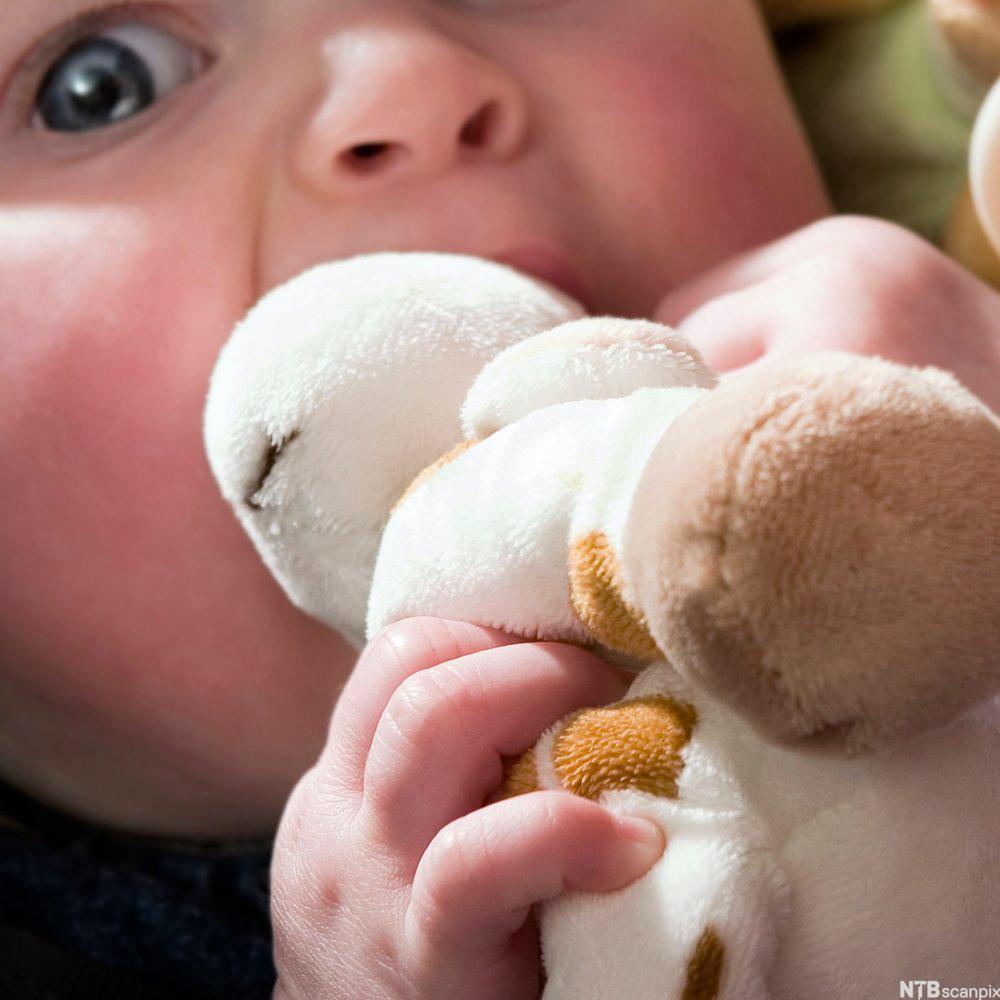 En baby putter en bamse inn i munnen.