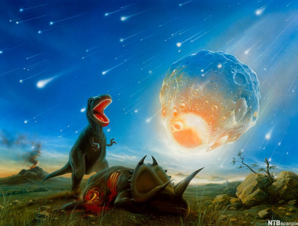 Tyrannosaurus rex utryddet av meteorittnedslag.