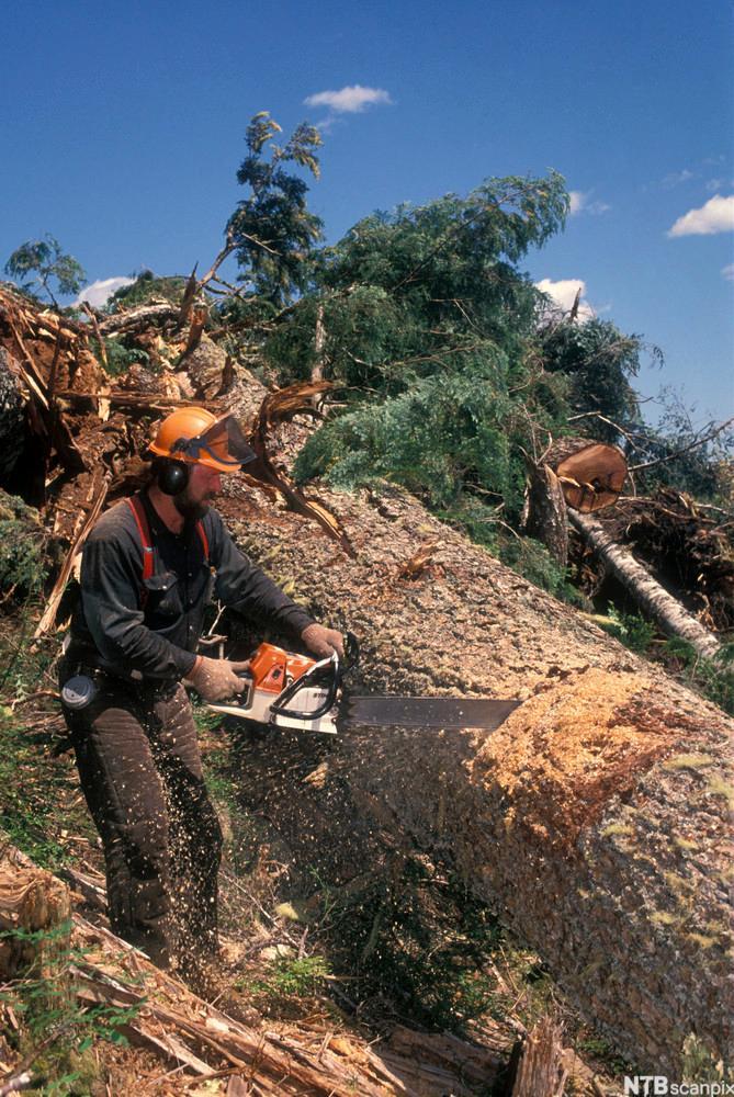 Logging. Foto.
