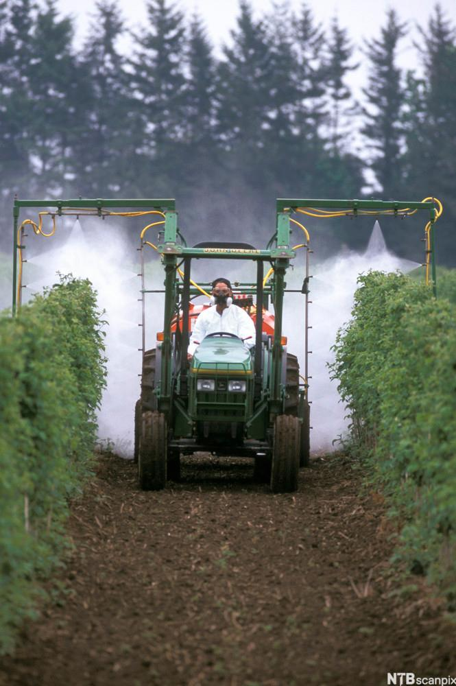 Crop Spraying. Photo.