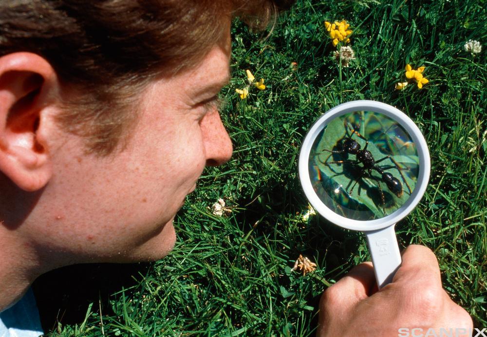 gutt som ser på ei maur gjennom eit forstørrelsesglas. Foto.