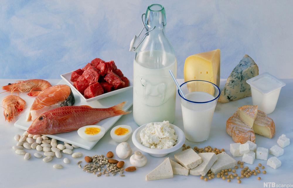 Bilde av ulike matvarer med høyt proteininnhold
