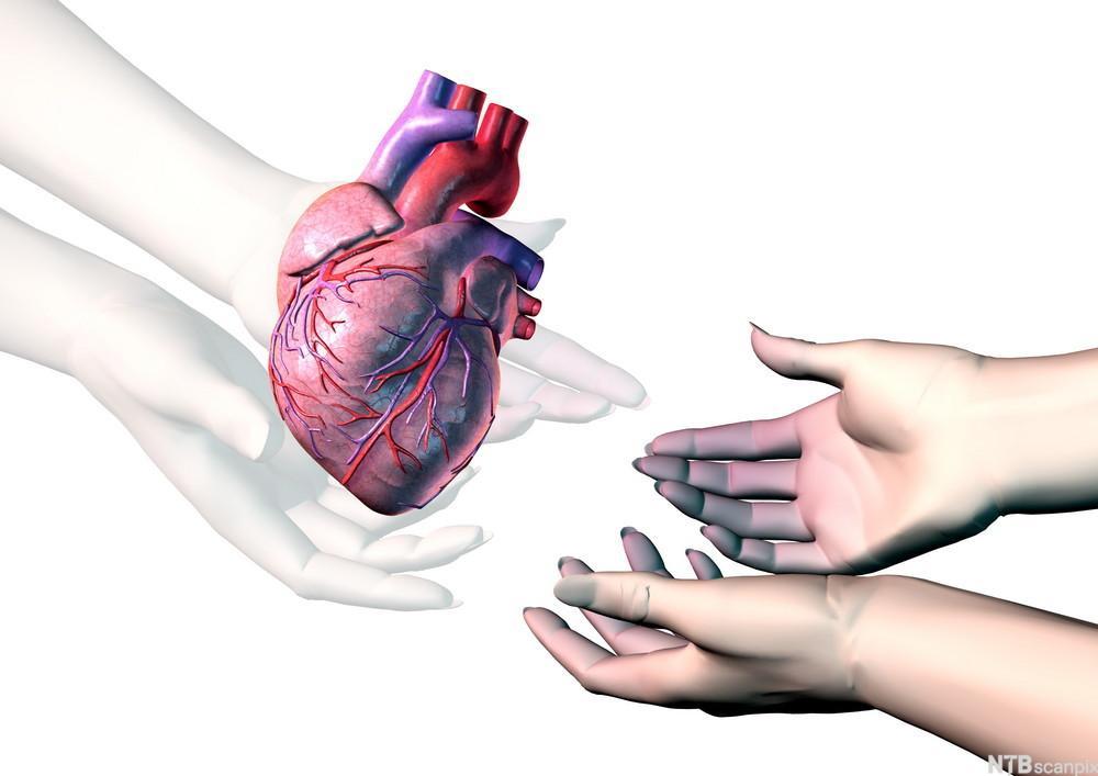 Gjennomsiktige hender gir et frisk hjerte til to hender som er blåaktige.