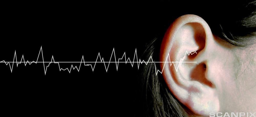 Lydbølger og øret - hørsel. Foto.