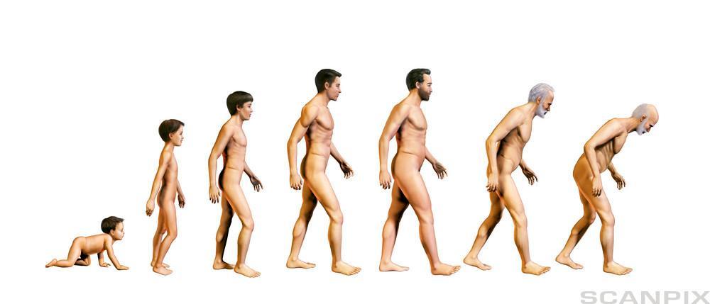 Menneskets utvikling. Foto.