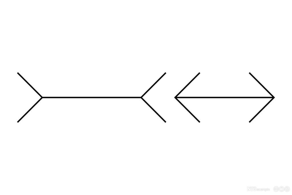 To like lange linjer som ser ulike ut. Illustrasjon.