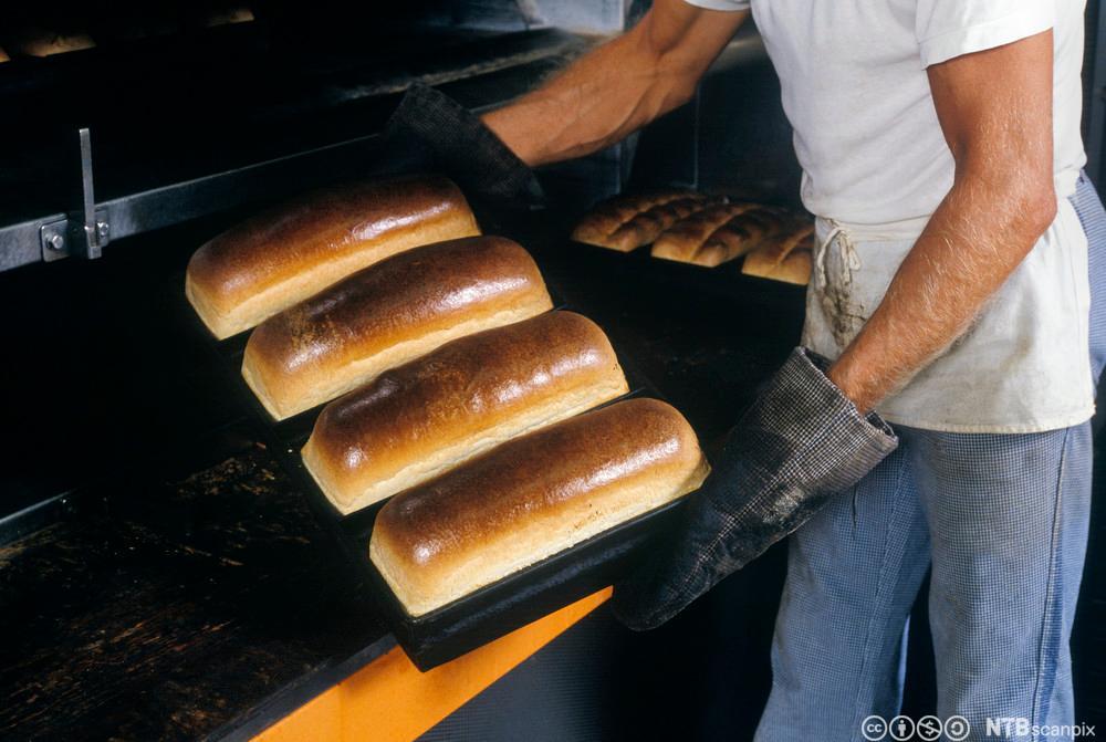 Baker som tar ut brød fra en bakerovn. Foto.