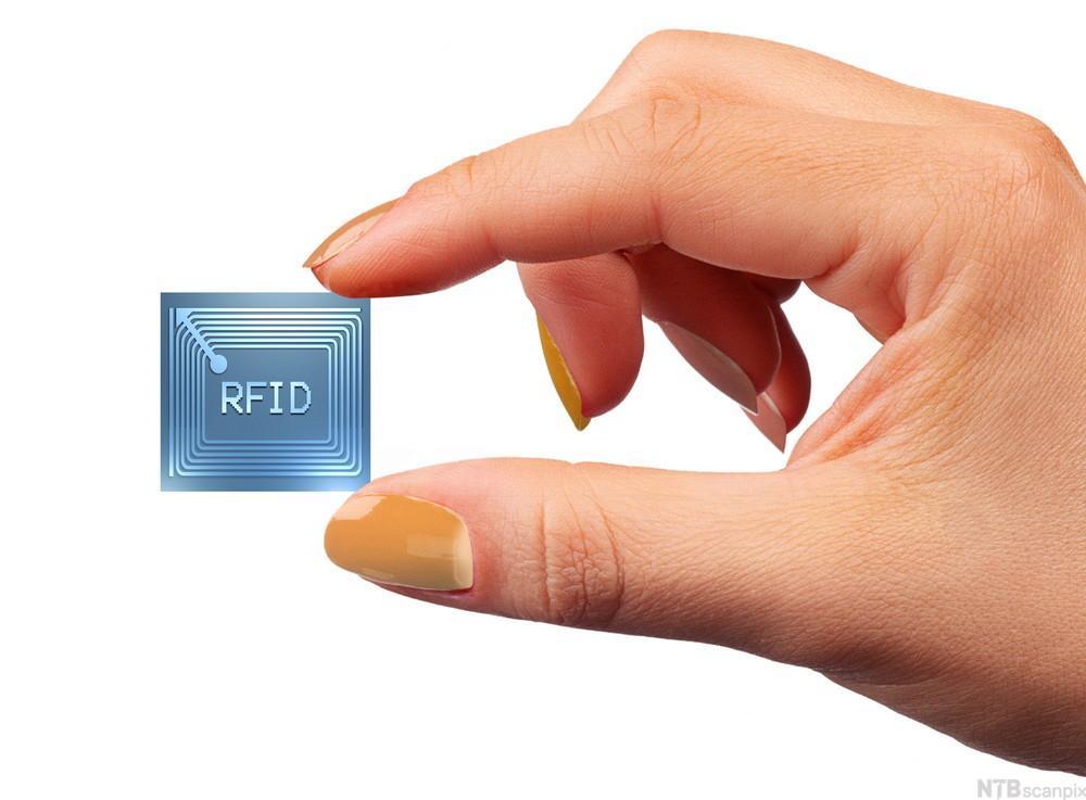 Hånd som holder en liten, blå RFID-chip.foto.