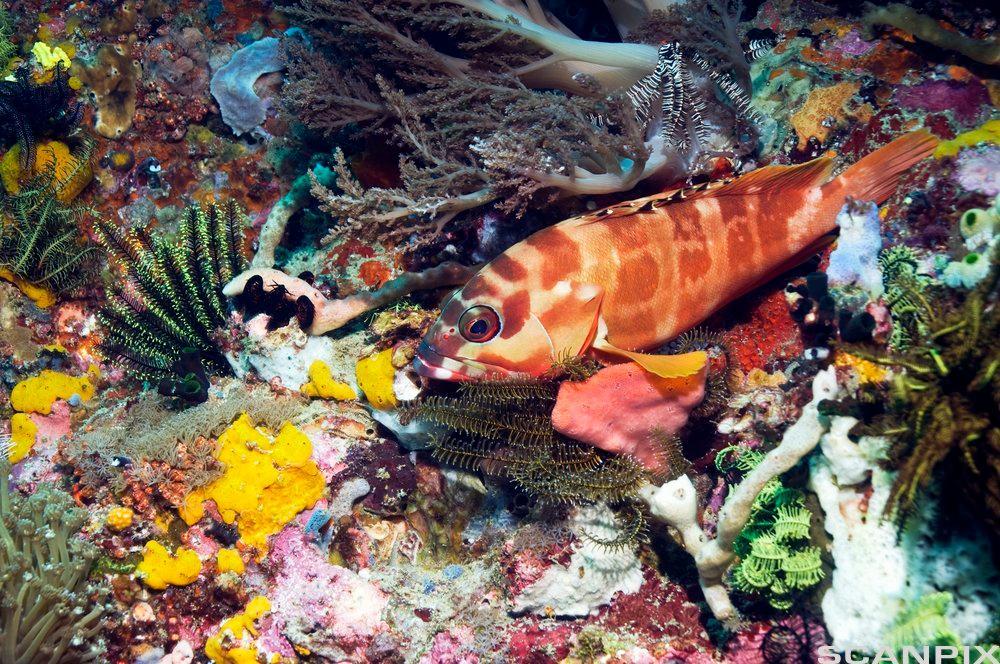 Fargerik fisk i korallrev. Foto