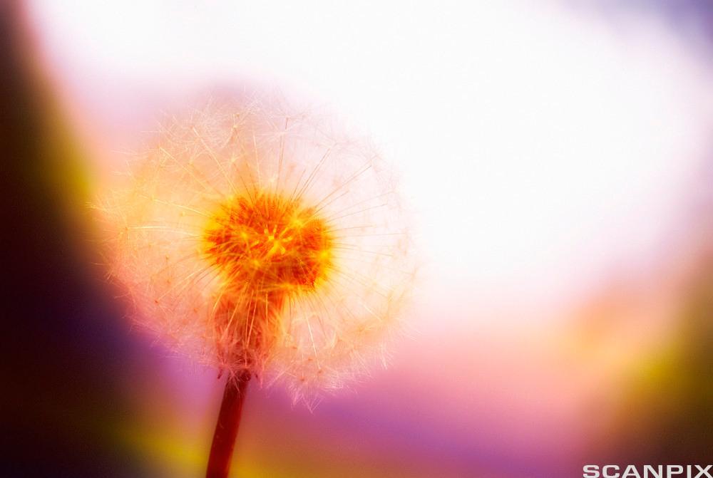 Blomst. Foto.