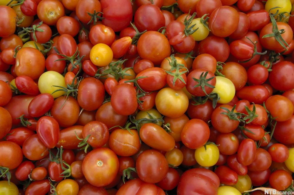 Bilde av økologiske tomater