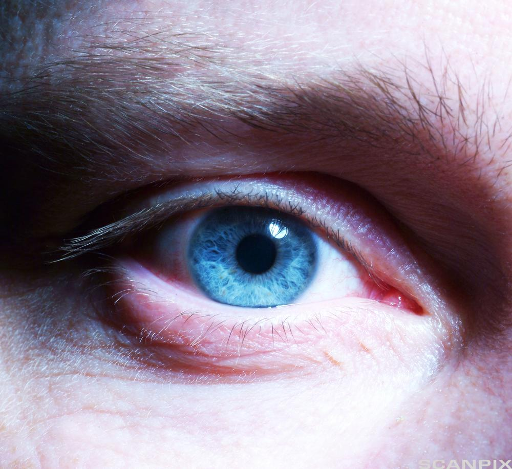 Nærbilde av blått øye. Foto.