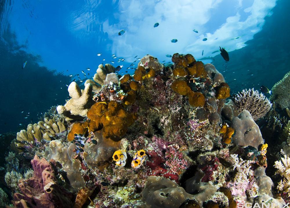 Korallandskap