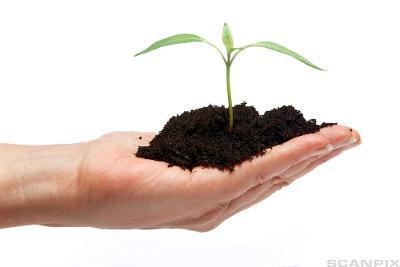 En hånd med jord og en stikling i. Foto.