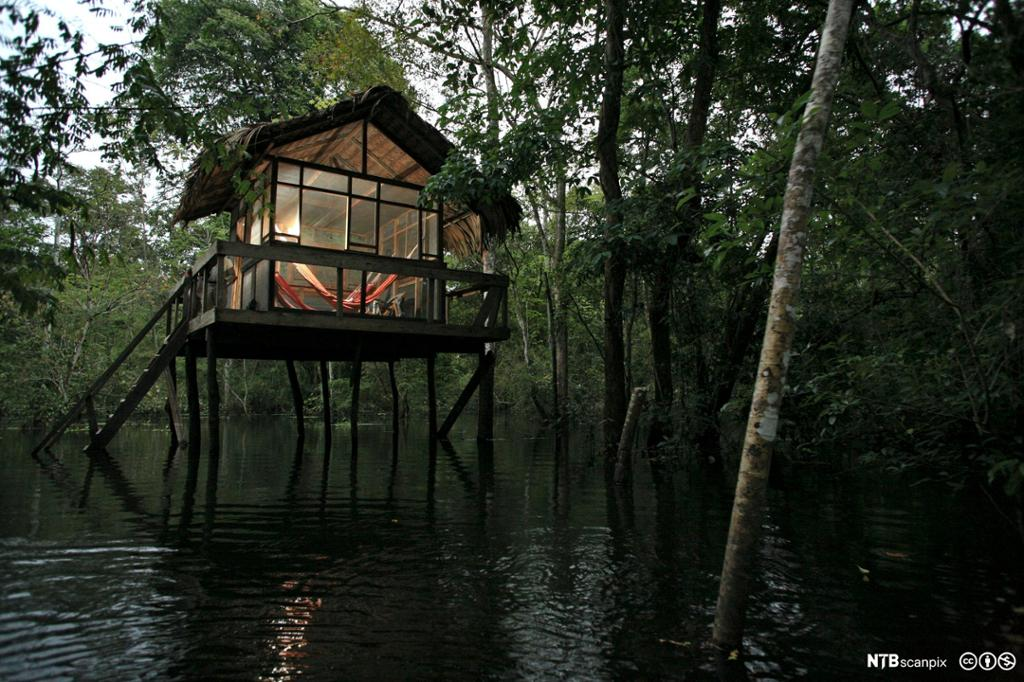 Hytte på stolper i Amasonas. Foto.