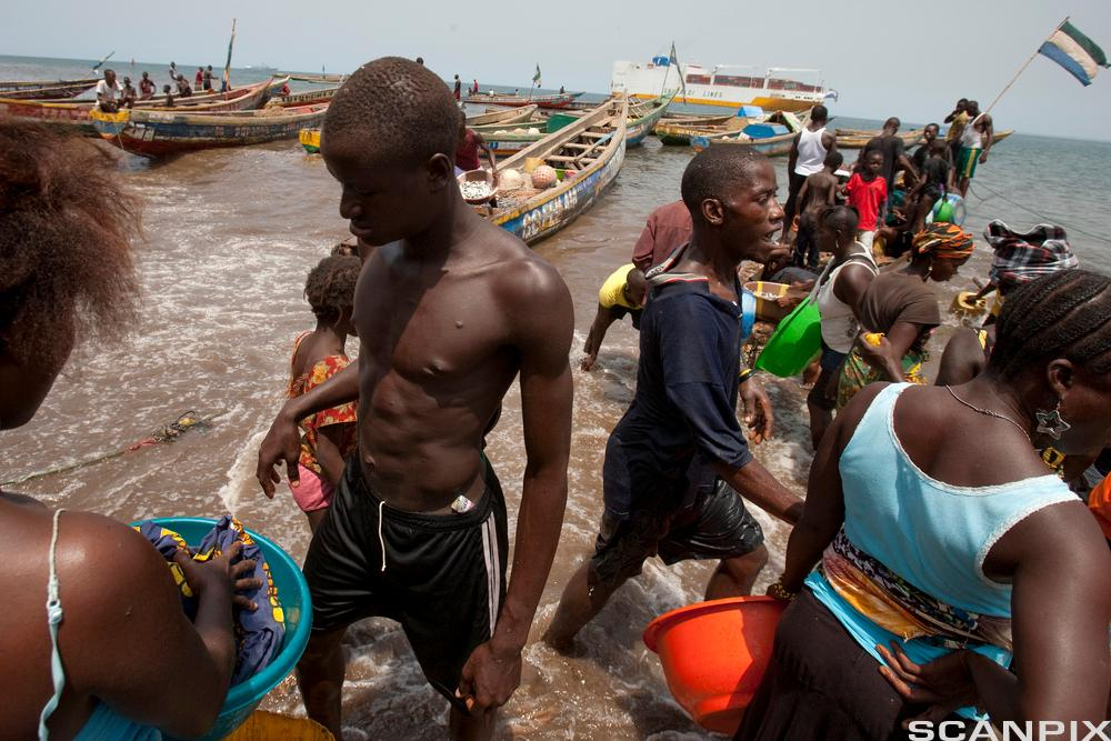 Fishermen bring their catch with boats ashore, taken on March 9, 2011 in Freetown, capital of Sierra Leone. 50 years ago, on 04/