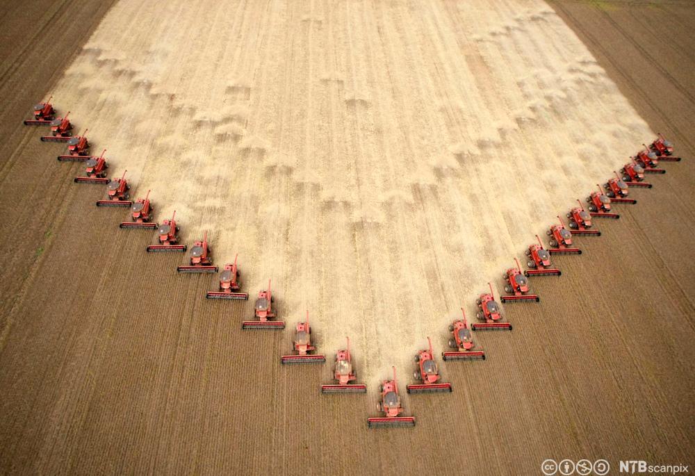 Traktorer kjører over soyaåkeren. Foto