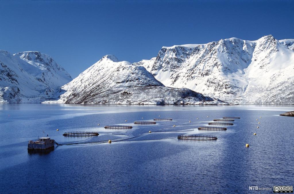 Oppdrettsanlegg i Finnmark. Foto.