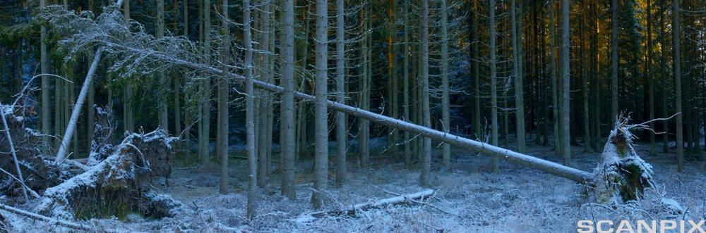 Mørk skog