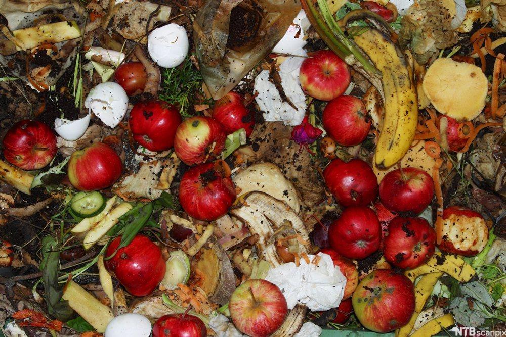 Kompost i kompostbinge. Foto.