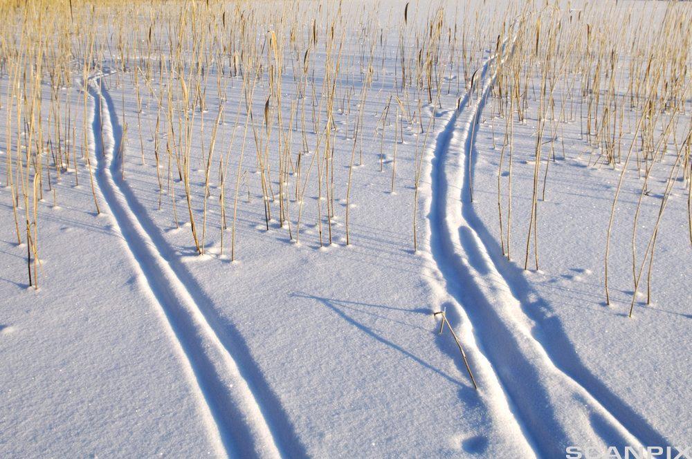 Skispor i snø. Bilde.