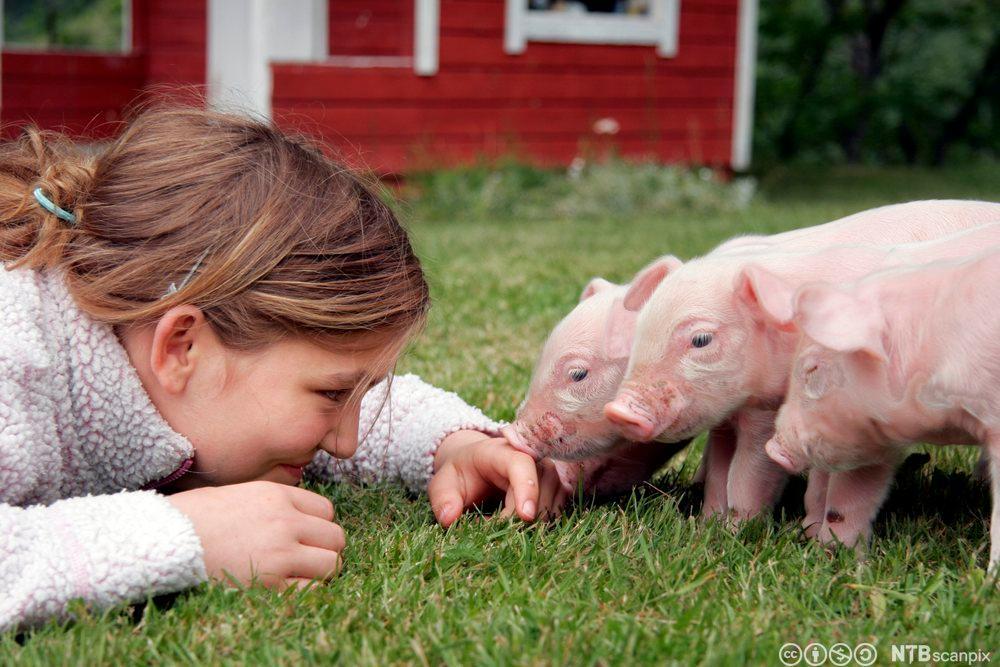 Jente med grisunger i gresset. Foto