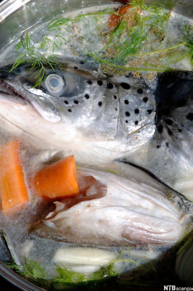 Fiskehoder og gulerøtter som blir kokt til fiskekraft.