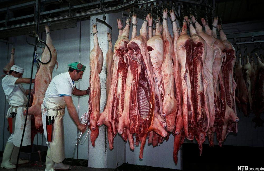 To slaktere skjører i kjøtt på et slakteri. Foto.