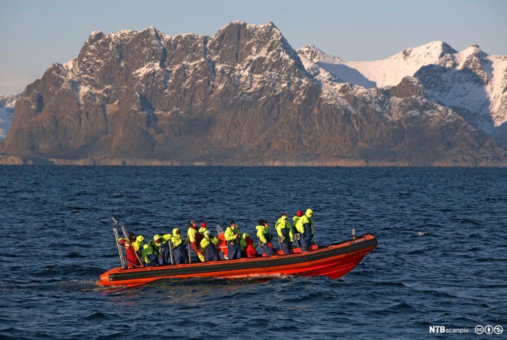 Turister på spekkhoggersafari i Lofoten. Foto.