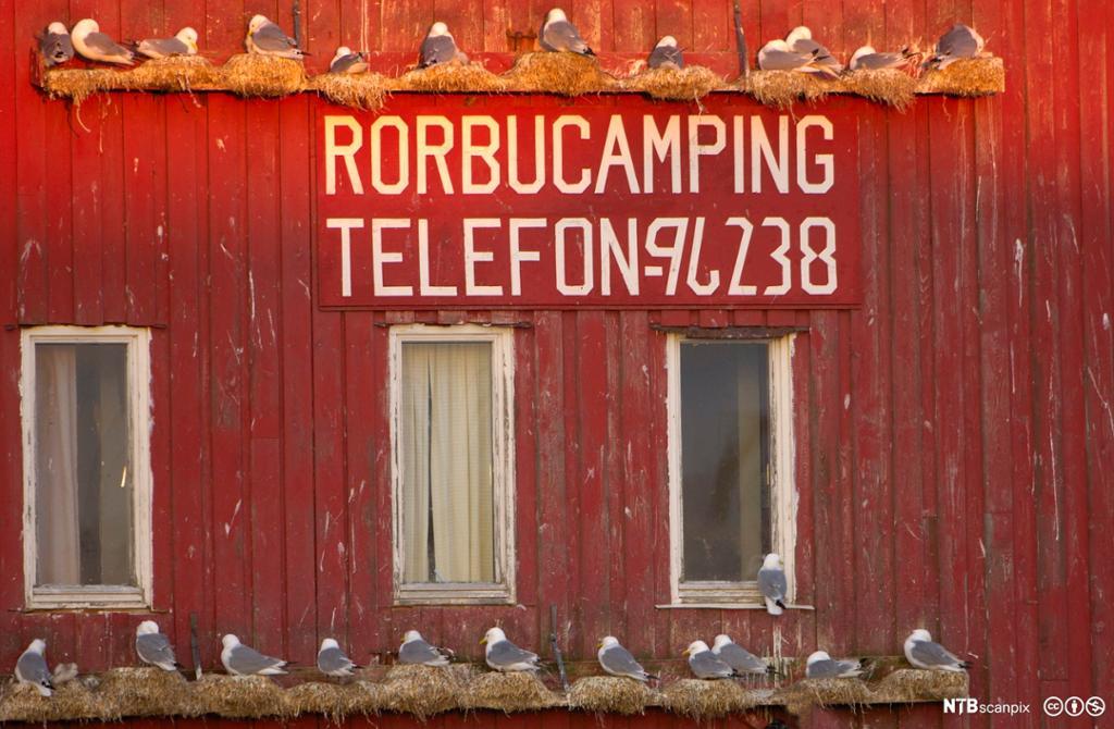 Rød rorbu med påmalt telefonnummer. Foto.