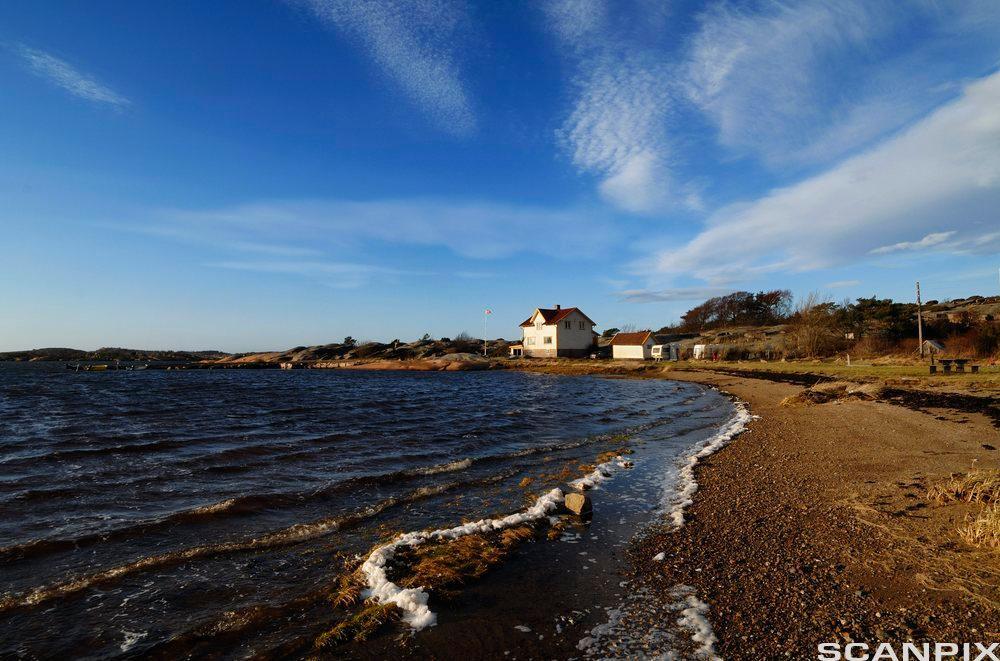 Landskap med blå himmel, hav, fjære og et hus i det fjerne. Foto.