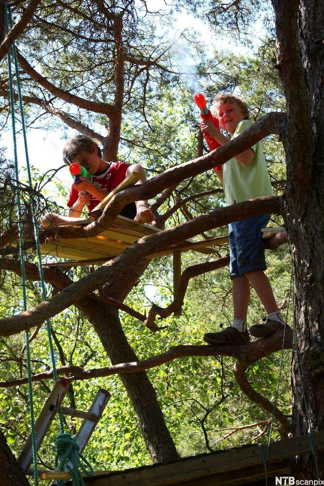To gutter sitter i et tre og leker med vanngivær. Foto.