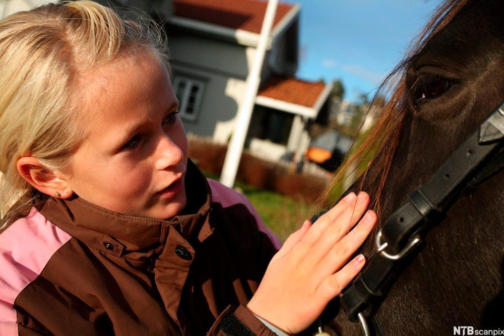 Nærbilde av ei lita jente som kjærtegner en hest. Foto.