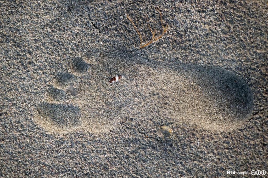 Avtrykk av naken fot i sand. Foto.
