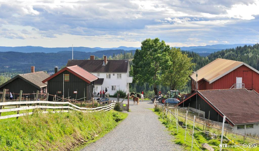 Grusvei som leder til Solli besøksgård og ridesenter i Oslomarka. Foto.