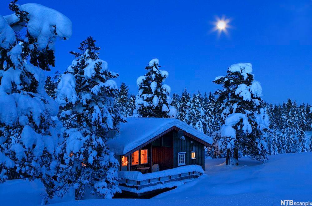 Hytte i vinterskog. Bilde.