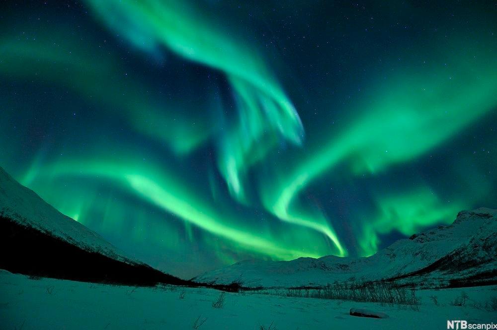 Grønne gardiner av blafrende nordlys.