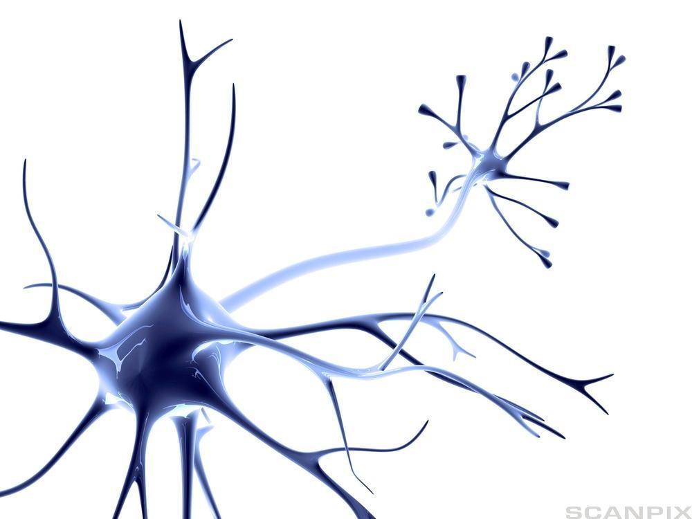 Nervecelle. Foto.