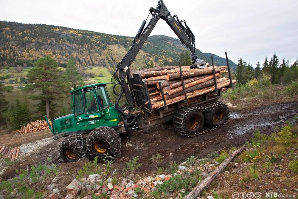 Lastetraktor med tømmer. Foto